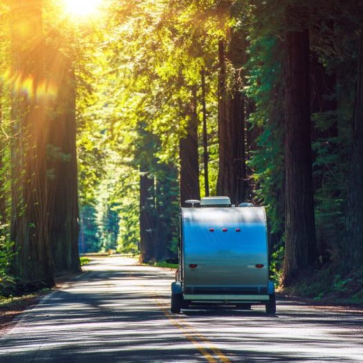 Camping in Redwoods